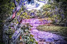 Bald Mountain Preserve, Camden, United States