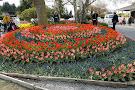 Roozengaarde Display Garden