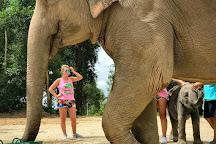 Elephant Retirement Park Phuket, Phuket, Thailand
