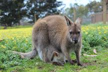 Kangaroo Island Wildlife Park, Seddon, Australia