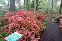 Jenkins Arboretum & Garden, Devon, United States