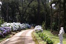 Trilha do Pinheiro Velho, Monte Verde, Brazil