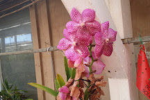 Santa Barbara Orchid Estate, Santa Barbara, United States