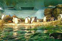 Oga Aquarium Gao, Oga, Japan