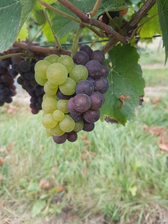 Weingut Porscha GbR