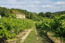Sandomierska Winery, Sandomierz, Poland