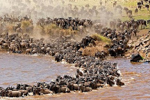 Tsavo Cats Tours and Safaris, Nairobi, Kenya