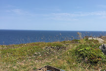 Lighthouse Picnics, Ferryland, Canada