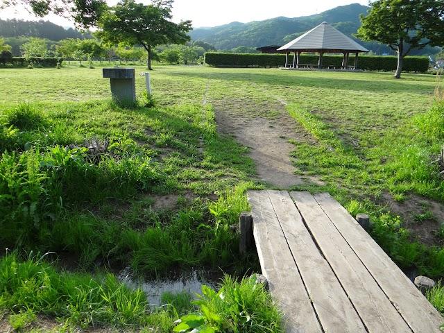 Kinchakuda Amaryllis Fields