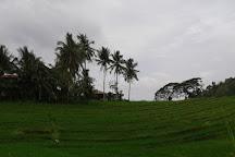 Cambuyo Rice Terraces, Bohol Island, Philippines