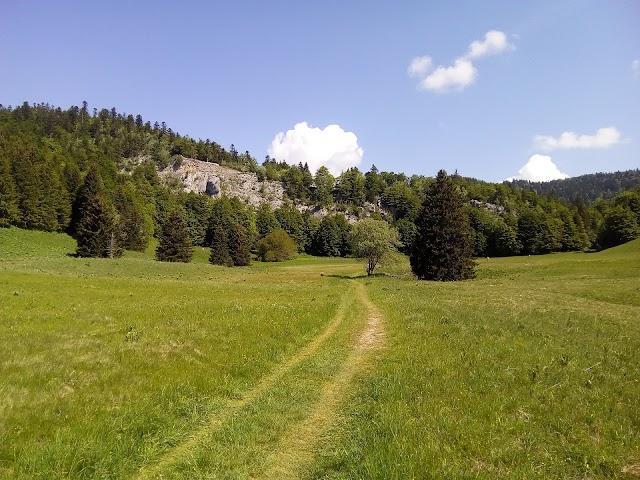 Route Forestière de la Grande Allée
