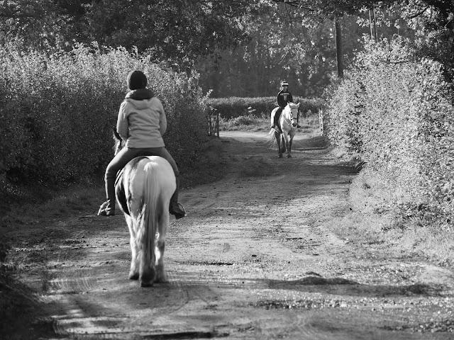 KA Horses Equestrian Centre
