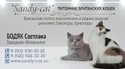 Питомник британских кошек Sandy-cat