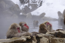 Jigokudani Snow Monkey Park, Yamanouchi-machi, Japan