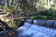 Parque Estadual de Campos do Jordão - Horto Florestal, Campos Do Jordao, Brazil