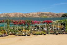 The Aloe Farm, Hartbeespoort, South Africa