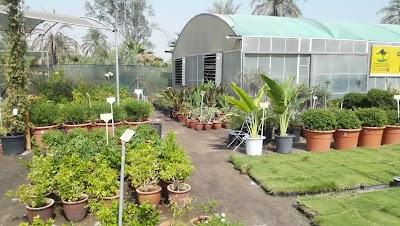 Zaid Alhussain Nursery Eastern Province 966 13 812 4432