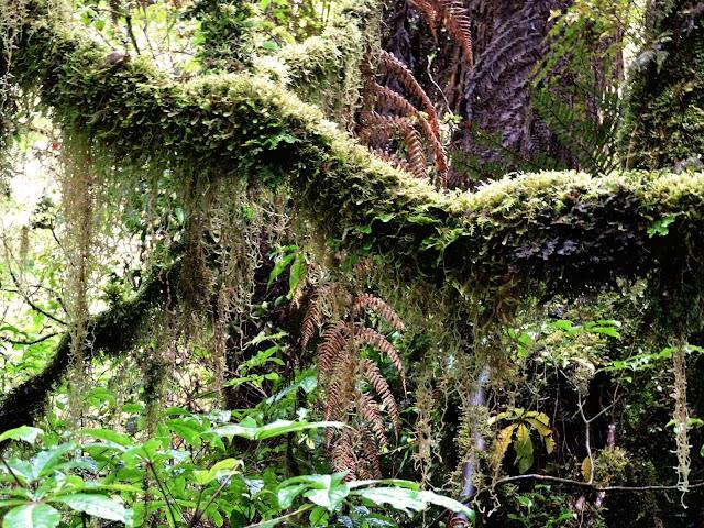 Fox Glacier Glow Worm Forest
