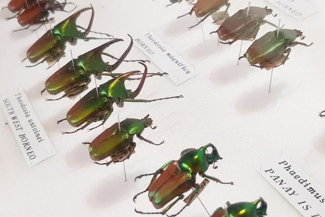 Daintree Entomological museum, Cape Tribulation, Australia