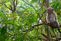 Monkey Jungle, Miami, United States
