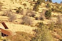 Prescott National Forest, Prescott, United States