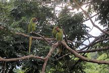 Ara Manzanillo, Manzanillo, Costa Rica