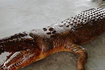 Tuaran Crocodile Farm, Tuaran, Malaysia