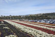 Poinsettia Park, Carlsbad, United States
