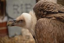 Eagle Heights Wildlife Foundation, Eynsford, United Kingdom