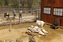 Amarillo Zoo, Amarillo, United States