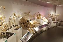 Naturhistorisk Museum, Aarhus, Denmark