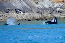 Spirit of Orca Whale Watching & Wildlife Tours, Friday Harbor, United States