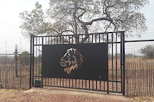 Lion and Cheetah Sanctuary, Cullinan, South Africa