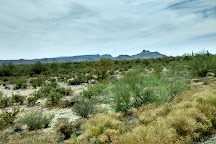 Sonoran Desert National Monument, Arizona, United States
