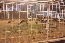 Taif Zoo, Taif, Saudi Arabia