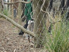 Meerkats london