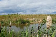 RSPB Titchwell Marsh, Titchwell, United Kingdom
