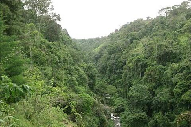 Gola Rainforest National Park, Kenema, Sierra Leone