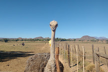 Highgate Ostrich Show Farm, Oudtshoorn, South Africa