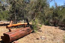Ngargee Tree, St Kilda, Australia