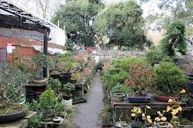 Bonsai Farm, Melbourne, Australia
