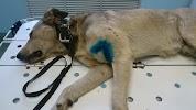 Ветеринарный кабинет ИП Русин Д.В., улица Лазо на фото Сызрани