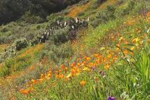 Ronald W. Caspers Wilderness Park, San Juan Capistrano, United States