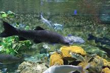 VinKE & Aquarium Times City, Hanoi, Vietnam