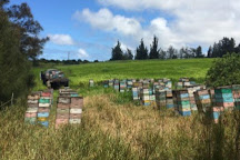 Big Island Bees, Captain Cook, United States