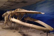 Penghu Fossil Museum, Penghu, Taiwan