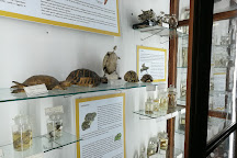 Museo Di Zoologia P. Doderlein, Palermo, Italy