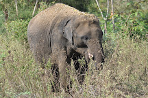 Arignar Anna Zoological Park, Chennai, India