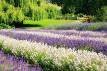 Purple Haze Lavender Farm, Sequim, United States