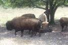 Big Cypress Reservation
